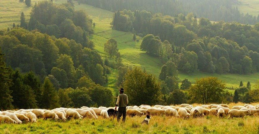 Da li je i koliko zastupljena organska poljoprivreda u Srbiji