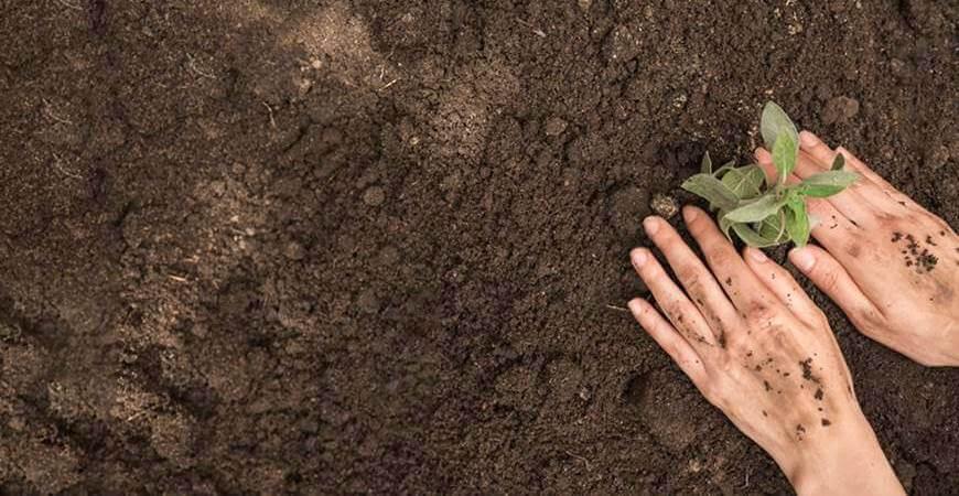 Najplodnija zemlja u Srbiji: gde se nalazi plodno poljoprivredno zemljište?